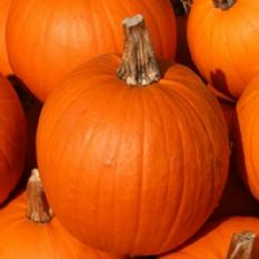 Pumpkin Small Sugar -30 seeds